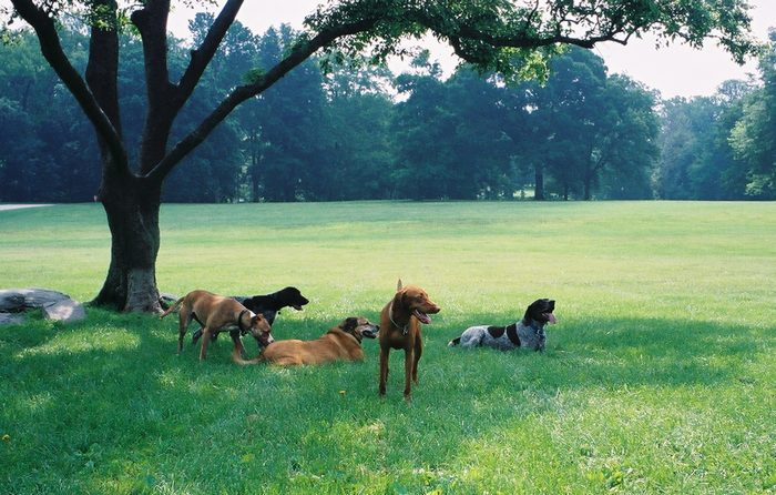About Mid Island Dog Park