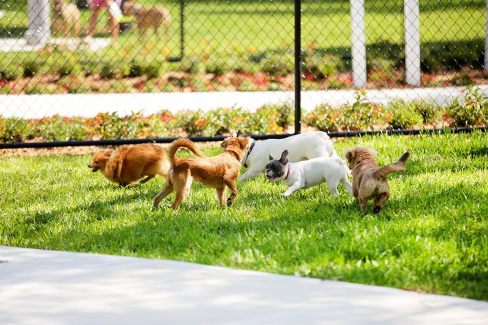 Addressing Dog-to-Dog Aggression Before Taking to the Dog Park