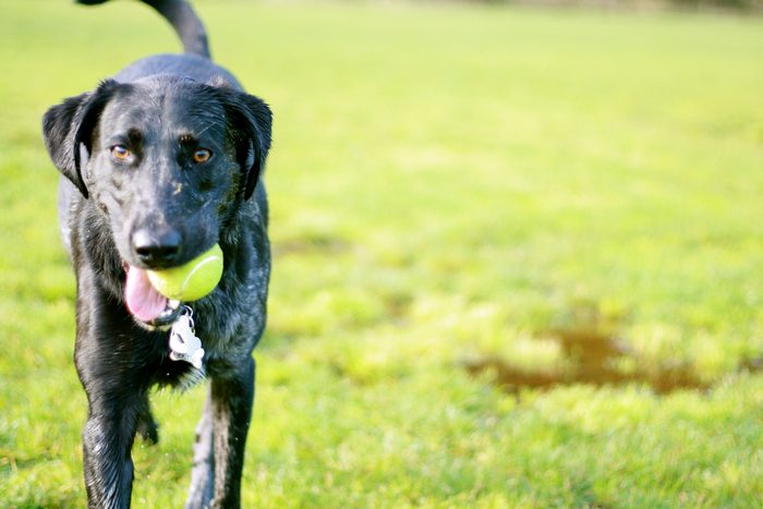Dog Parks: Knowing When to Take Your Dogs Home