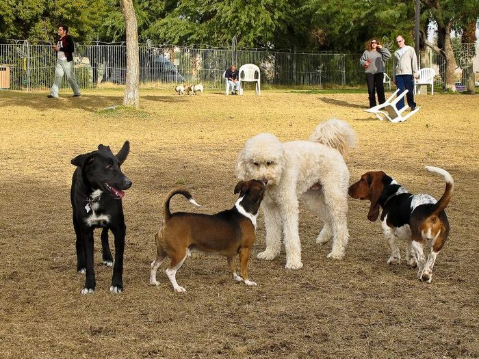 The Benefits of Having a Dog Park in the Community