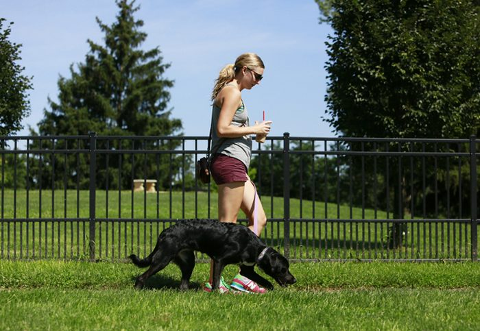 What You Should Keep in Mind when Bringing Your Pet to the Park